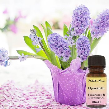 Hyacint Doftolja 10ml