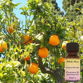 Citruslund Doftolja 10ml