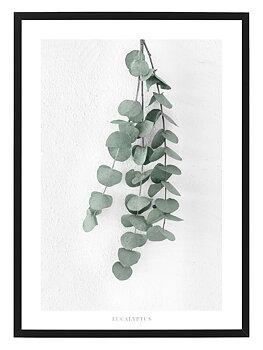 Poster Eucalyptus by Mujo