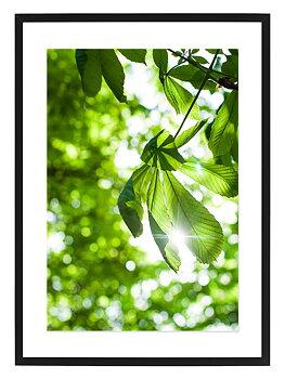 Poster sol