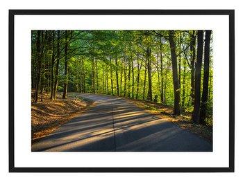 Poster skogsväg i bokskogen