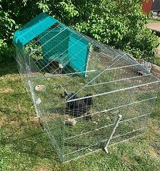 Utegård för både höns och kaniner