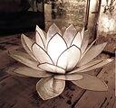 Lotus Ljushållare XL - Naturvit
