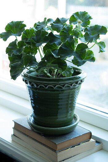 Plant Pot Dark Green