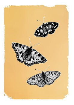 Drawn in gold : Butterflies