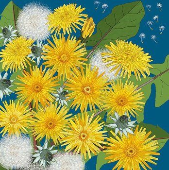 Mig Wyeth : Dandelions and wishes - Kort med kuvert